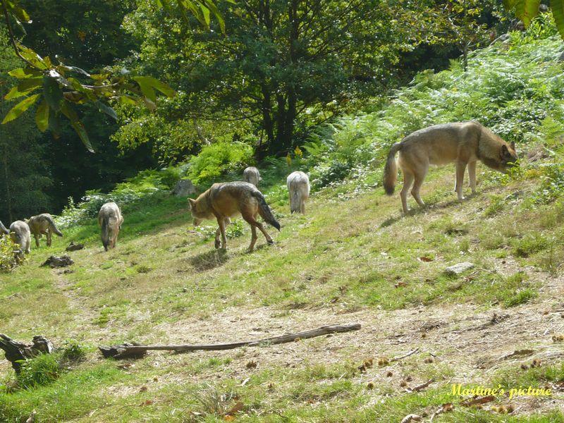 Loups de Chabrières 2