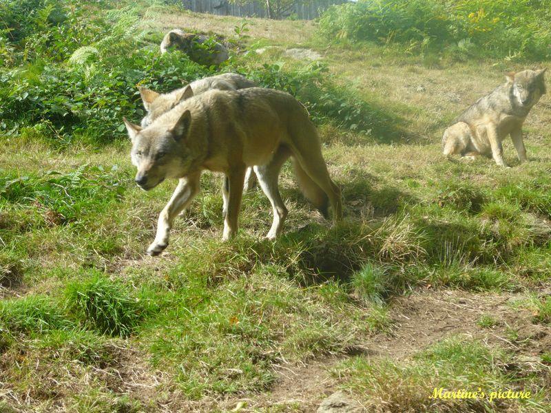 Loups de Chabrières 9.psd